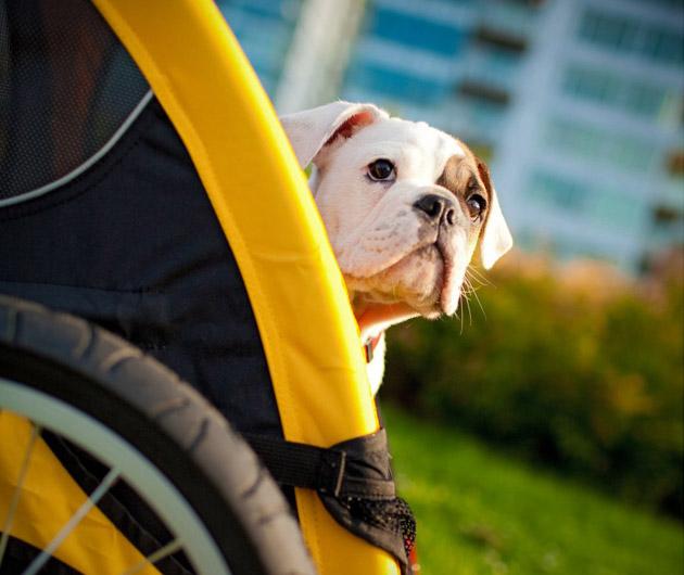 Burley Tail Wagon Bike Trailer