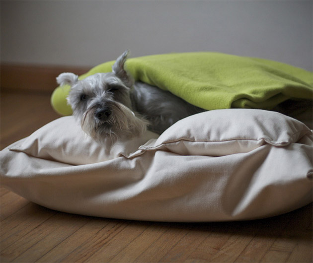 Chico & Dog Beds