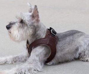 Chico & Dog Hemmingway Harness